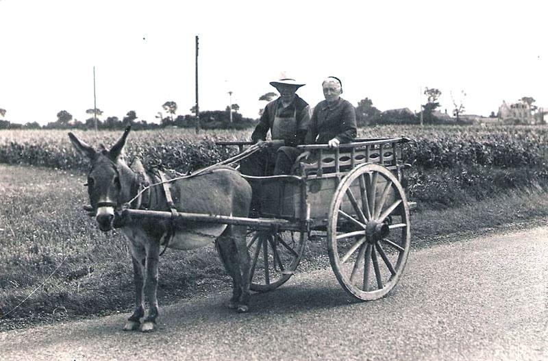 contadini_carro_asino