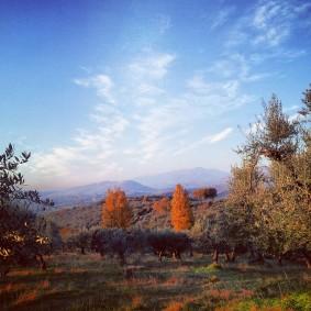 Scandriglia, 2013